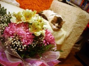 Кот с букетом